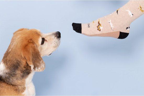 calcetines-amor-perruno-perritos